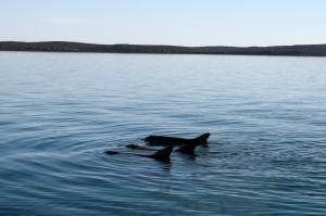 Dolphin Snagging trio