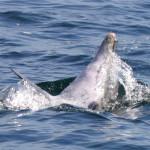 WSBDolphin Snack catch (SJA)