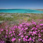 WSBLandscape Flowers South Passage