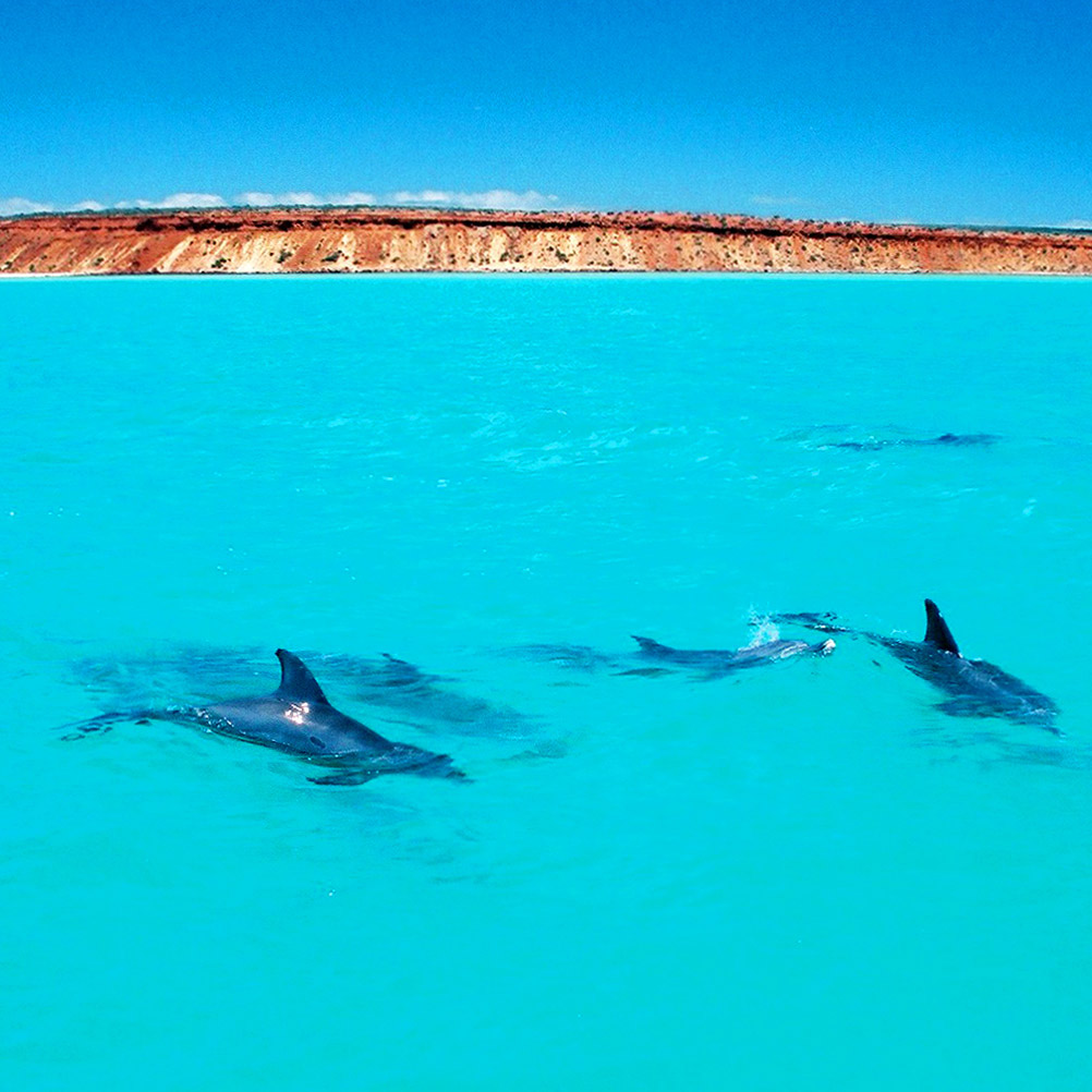 2e Square Dolphins and Peron colours (ESB)