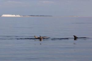 11 Dolphins and salt
