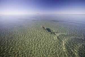 8 Radar in the Shark Bay aquarium