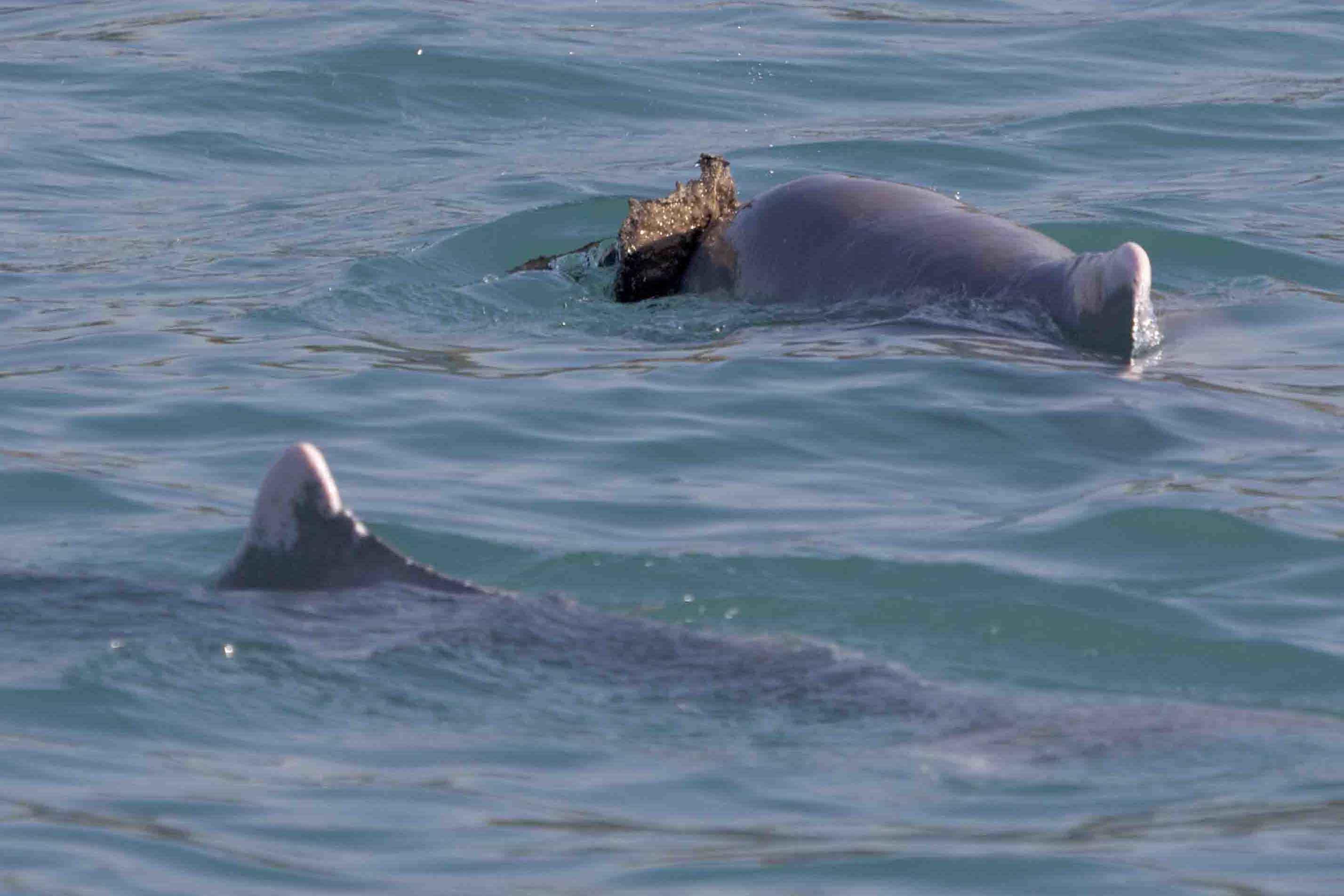 latest news shark bay dolphins